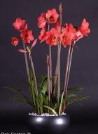 Pink Garden ®