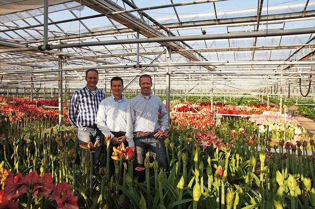 Amaryllis kwekerij N.L. van Geest b.v.